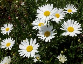 5-20花