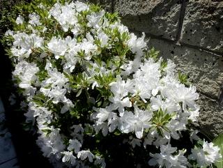 庭の花 (2)