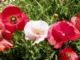 庭の花 (38)
