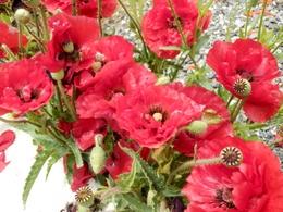 庭の花 (27)