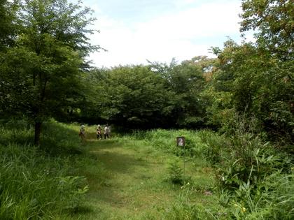 天平の森 (7)