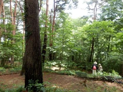 天平の森 (8)