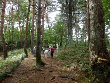 天平の森 (9)
