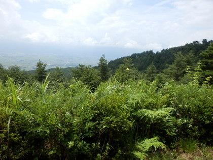 天平の森 (21)