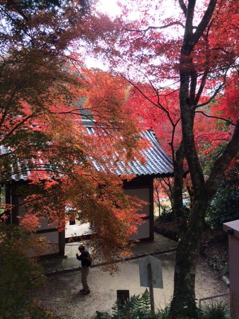 三木紅葉23
