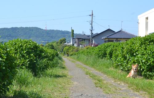 201305N_6160.jpg