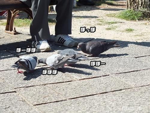 ハトの集会