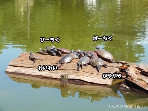 カメの集会