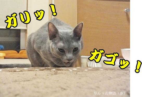 凛のお食事3