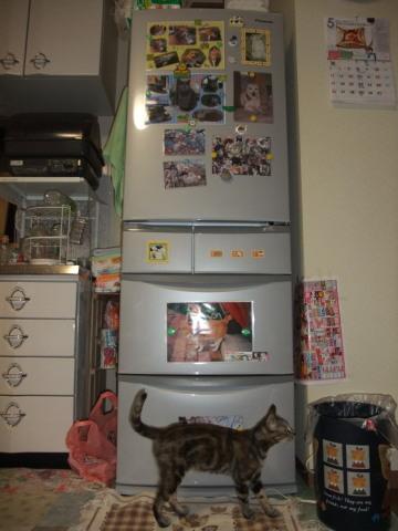 冷蔵庫おニュー