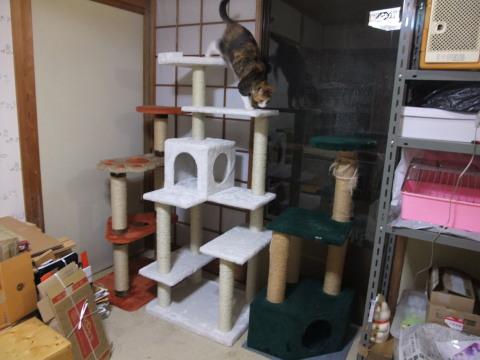和室のタワー