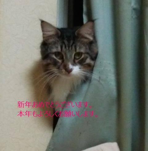 20140101-001.jpg