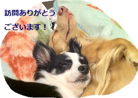 IMG_6103.jpg