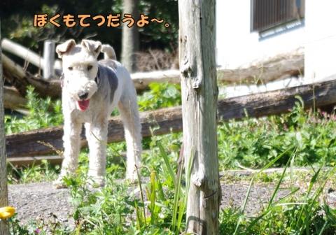 稲刈り2014 その1③