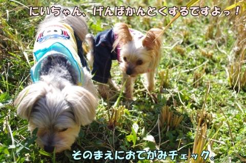 稲刈り2014 その1①
