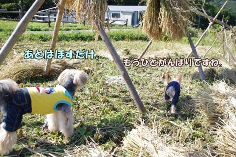 稲刈り2014 その1⑨