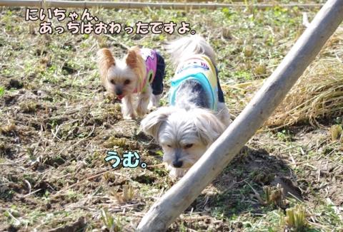 稲刈り2014 その1⑦
