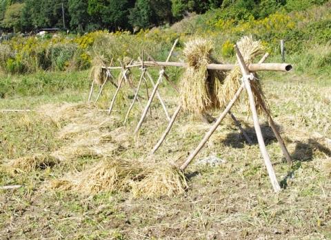 稲刈り2014 その1⑧