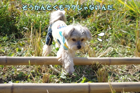 稲刈り2014 その1⑥