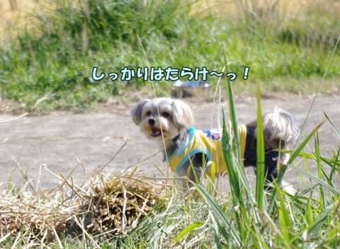 稲刈り2014 その1⑤