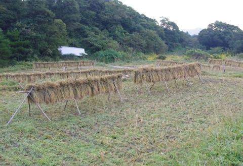 稲刈り2014 その1⑪
