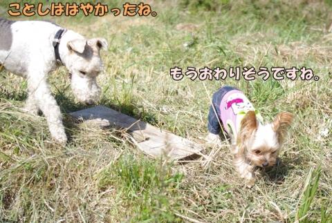 稲刈り2014 その1⑩