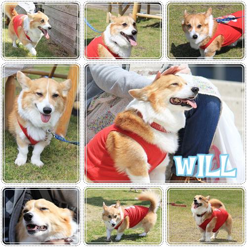 ウィル君☆