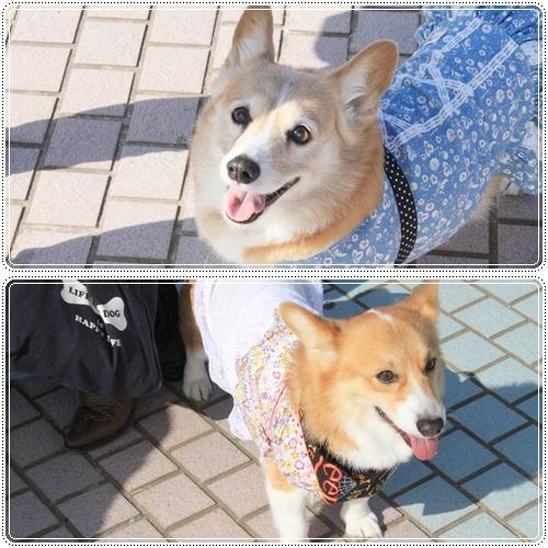 はなちゃん&チェルちゃん