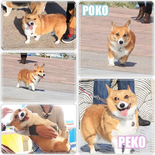 ペコポコちゃん☆