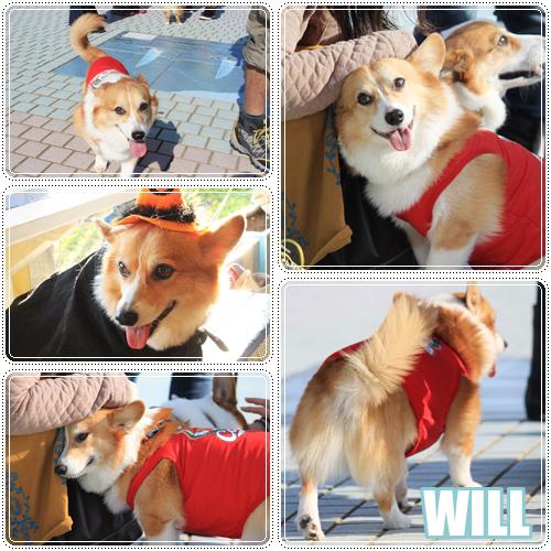 WILL君☆