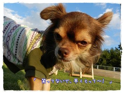 JOY2013102603.jpg