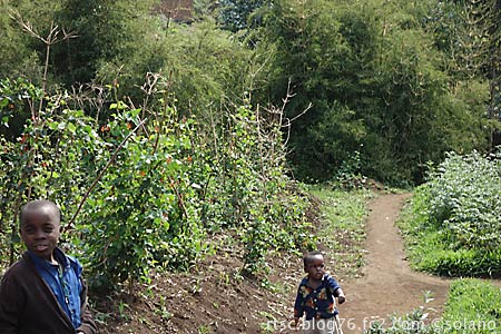 ルワンダゴリラトレッキング、沿道の子供達