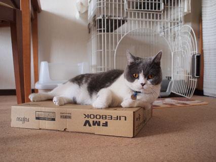 ぼくの箱ですから
