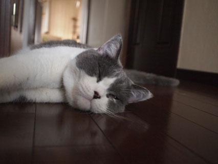 まだ眠い・・・