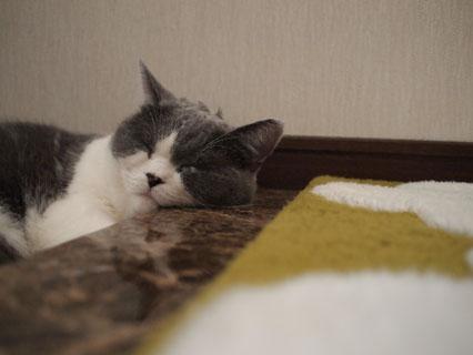 ゆっくり寝させてよ