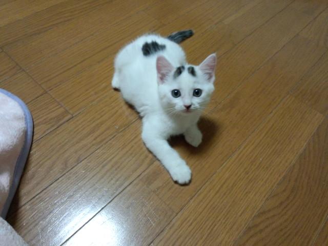 1suzuka20130615.jpg