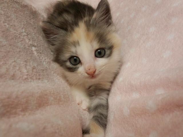 1urawacatspasuteru20130620.jpg