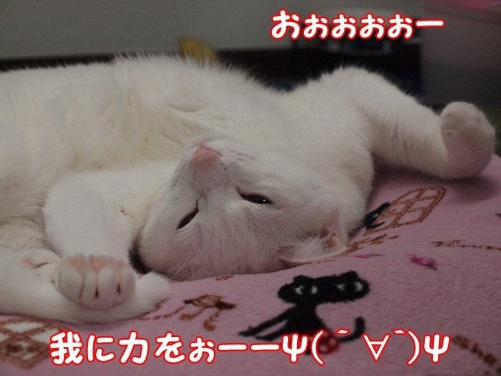 1daisynya20130428 (6)