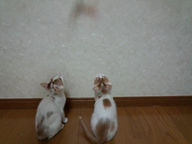 1urawacats20130520 (1)