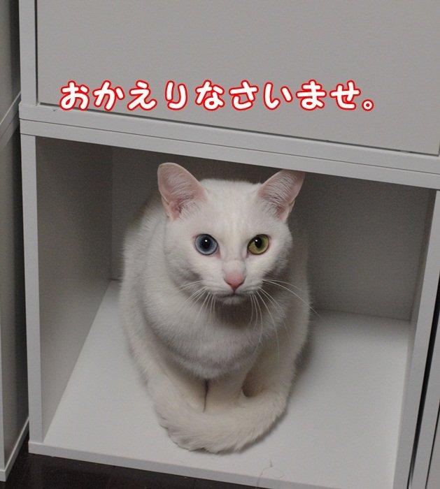 1daisyjyou20130531 (2)