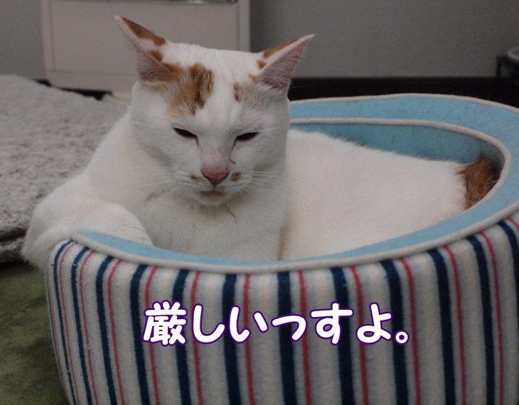 1listnyuuyoku20130611 (1)