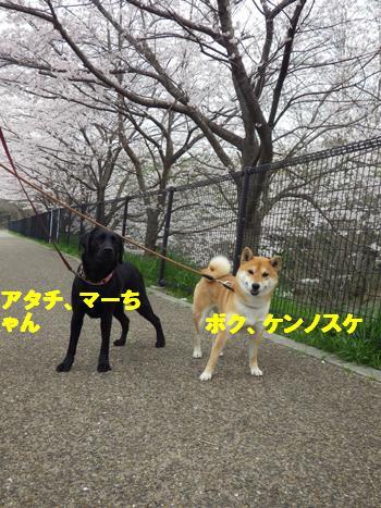 サクラとともだち5 (1)