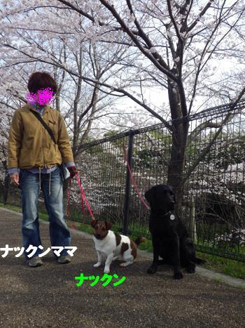 サクラとともだち5 (3)