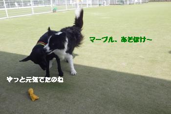 プチ1 (1)