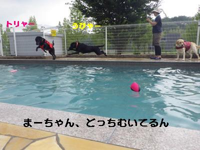 IMGP7070.jpg