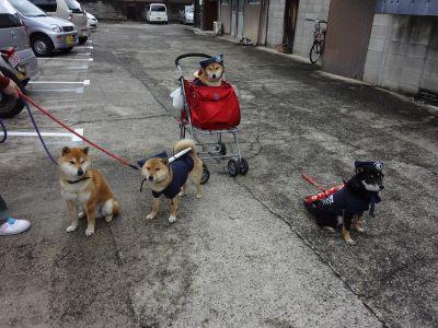 伊賀・忍者犬軍団