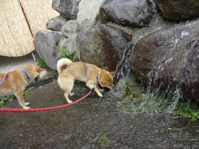 ゆり園水遊び5