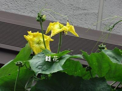 DSC03437_400.jpg