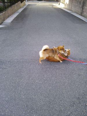散歩 4 2013.5