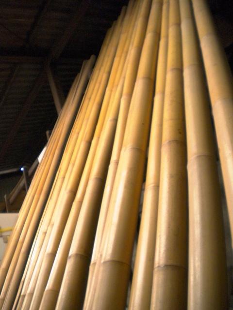 トンキン竹
